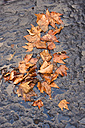 Autumn leaves in puddle - MHF000240