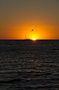 Australia, Western Australia, Perth, sailing boat and seagull at sunset on the ocean - MBEF000991