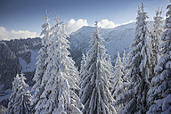 Germany, Bavaria, Sudelfeld, Mountains in winter - FFF001384
