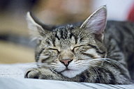 Portrait of sleeping cat - SARF000162
