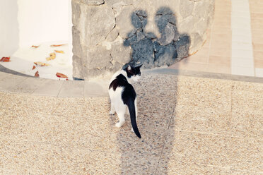 Spain, Lanzarote, silhouettes of mother and little son watching a cat - MF000691