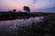 Germany, North Rhine-Westphalia, Recker Moor, Landscape with cotton grass at sunrise - PAF000097