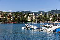 Italy, Liguria, Santa Margherita Ligure, Townscape with harbor - AMF001461