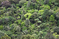 New Zealand, Coromandel Peninsula, part of rainforest - GWF002431
