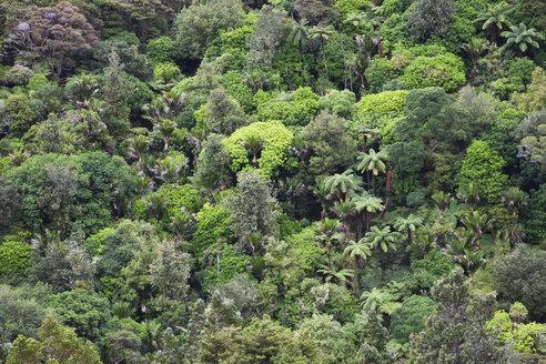 New Zealand, Coromandel Peninsula, part of rainforest - GWF002431