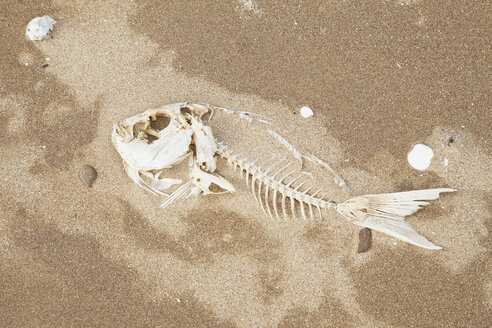 New Zealand, Coromandel Peninsula,  Snapper bones on sandy beach - GWF002433