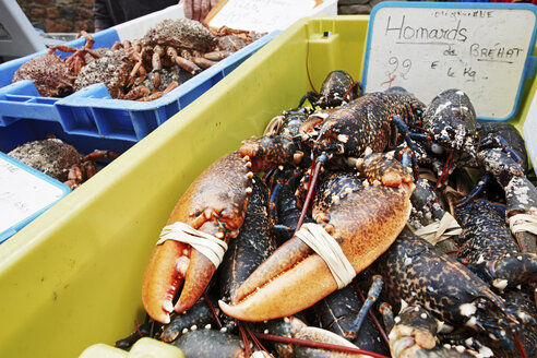 France, Bretagne, Paimpol, Lobster on market - BIF000229