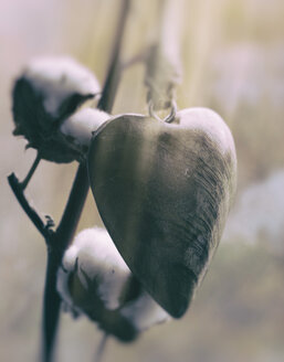 Wooden heart hanging in front of cotton branch - GSF000563
