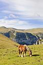 Spain, Aragon, Central Pyrenees, Ordesa y Monte Perdida National Park, Canon de Anisclo, wild horses on meadow - LAF000363