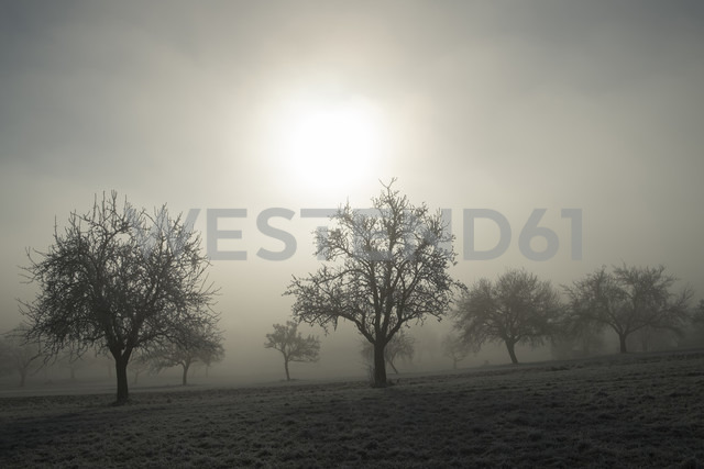 Germany, Baden-Wuerttemberg, Tuttlingen district, meadow with scattered fruit trees and wafts of mist - ELF000740 - Markus Keller/Westend61