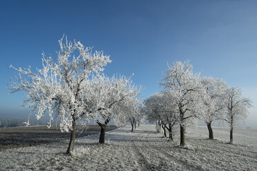Germany, Baden-Wuerttemberg, Tuttlingen district, meadow with scattered fruit trees, covered with frost - ELF000738