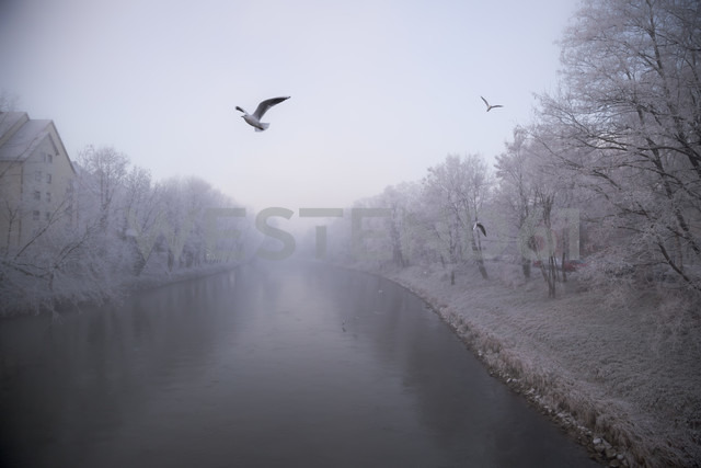 Germany, Bavaria, Landshut, Isar river and seagulls, morning mist - SARF000181
