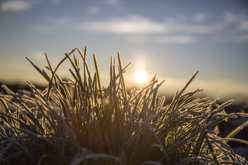 Germany, Bavaria, grass covered with frost, morning sun - SARF000185