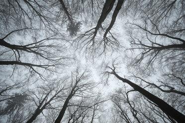 Switzerland, Thurgau, Beech forest in fog - ELF000748