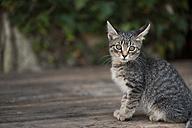 Croatia, Vrsar, Cat - KJ000284