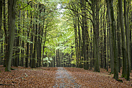 Germany, Mecklenburg-Western Pomerania, Ruegen, Jasmund National Park, forest path, beech forest in autumn - WIF000257