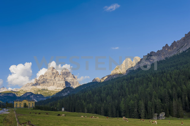 Italy, view to Dolomite Alps, cattle herd  in front - MJ000439 - Jana Mänz/Westend61