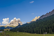 Italy, view to Dolomite Alps, cattle herd  in front - MJ000439