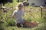 Italy, Bolzano, little boy kneeling in herb garden - MJF000444