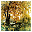 Autumn tree in a beer garden, Germany, Lower Saxony, Munster - SEF000139