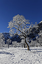 Austria, Tyrol, Eng, Grosser Ahornboden, landscape with snow covered maple trees - GFF000379