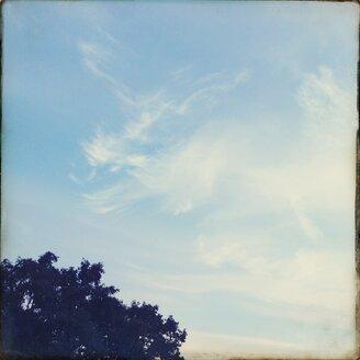 Sky - BMF000788