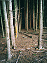Dead ForeSt. tree death, fir, NRW, Germany - ONF000295