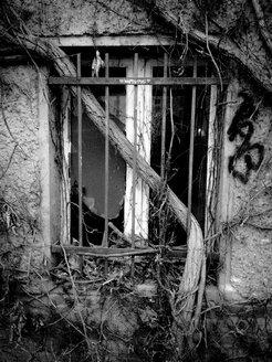trunk in window screen, Berlin, Germany - FBF000122