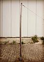 Tensed wooden pole, rabbits Moor, Germany - FBF000119