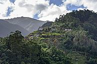 Portugal, Madeira, mountain near Santana - HLF000345