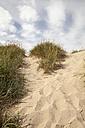 Germany, Mecklenburg-Western Pomerania, Ruegen, Kreptitzer Heath Nature Reserve, sand dune - WIF000294