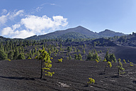 Spain, Canary Islands, La Palma, Llano de Jable near El Paso with volcano Pico Birigoyo - SIEF004946