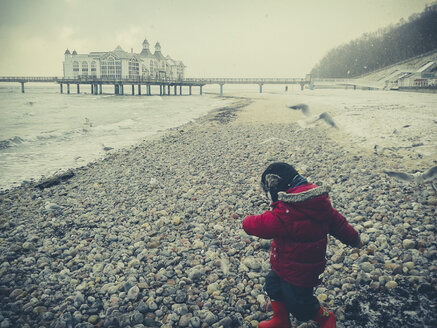 Baltic Sea, Mecklenburg-Vorpommern, Ruegen, Germany, gulls, pier, Selin, boy, Beach, winter - MJF000524