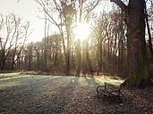 ForeSt. trees, winter, Saxony, Germany - MJF000529