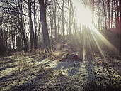 ForeSt. trees, winter, Saxony, Germany - MJF000519