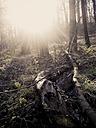 ForeSt. trees, winter, Saxony, Germany - MJF000526