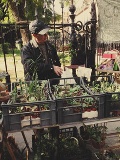 Old man selling little flower pots on a market, Palermo, Sicily, Italy - MEA000035