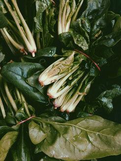 Organic salad, Palermo, Sicily, Italy - MEAF000097