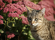 Portrait of tabby kitten in front of red blossoms - SLF000249