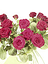 Bouquet of red roses, Germany - HOHF000333