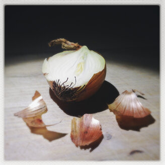 Onion, Germany - GSF000703