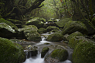 Japan, Waterfall in the rainforest of the Island Yakushima, Unesco World Heritage Natural Site - FLF000362