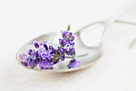 Blossoms of lavender (Lavendula) on spoon, close-up - GWF002480
