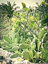 Prickly pear (Opuntia), Gold Yellow Aeonium (Aeonium holochrysum), Canary Island date palm (Phoenix canariensis), La Gomera, Spain - DISF000369