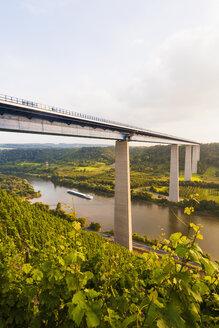 Germany, Koblenz, View of motorway bridge Moselle Viaduct crossing Mosel Valley - WDF002164