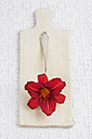 Blossom of red daylilly (Hemerocallis) on  spoon and wooden board, close-up - GWF002498