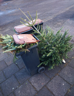 Cologne, North Rhine-Westphalia, Germany, christmas tree is disposed - JATF000584