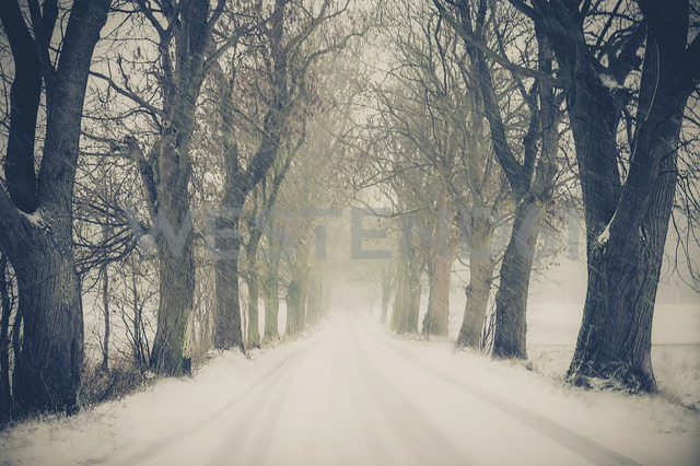 Germany, Mecklenburg-Western Pomerania, Ruegen, Snow storm - MJF000659 - Jana Mänz/Westend61