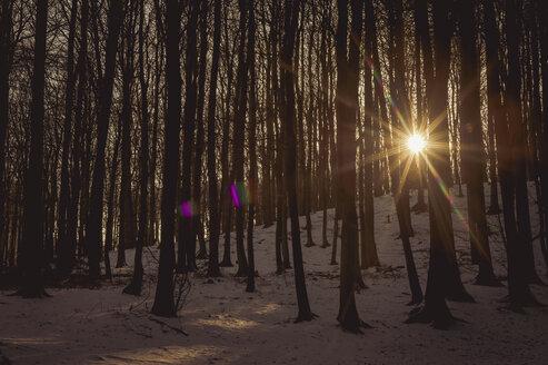 Germany, Mecklenburg-Western Pomerania, Ruegen, Trees at sunset - MJF000665