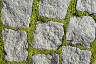 Germany, Baden-Wuerttemberg, Constance, granite cobblestones with moss between the gaps, close-up - ELF000813